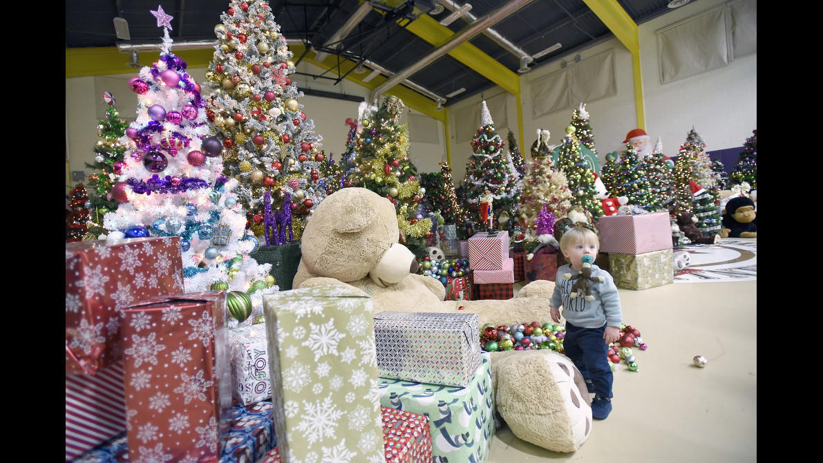 Taking Root: A Christmas Tree Forest Keeps Growing At St